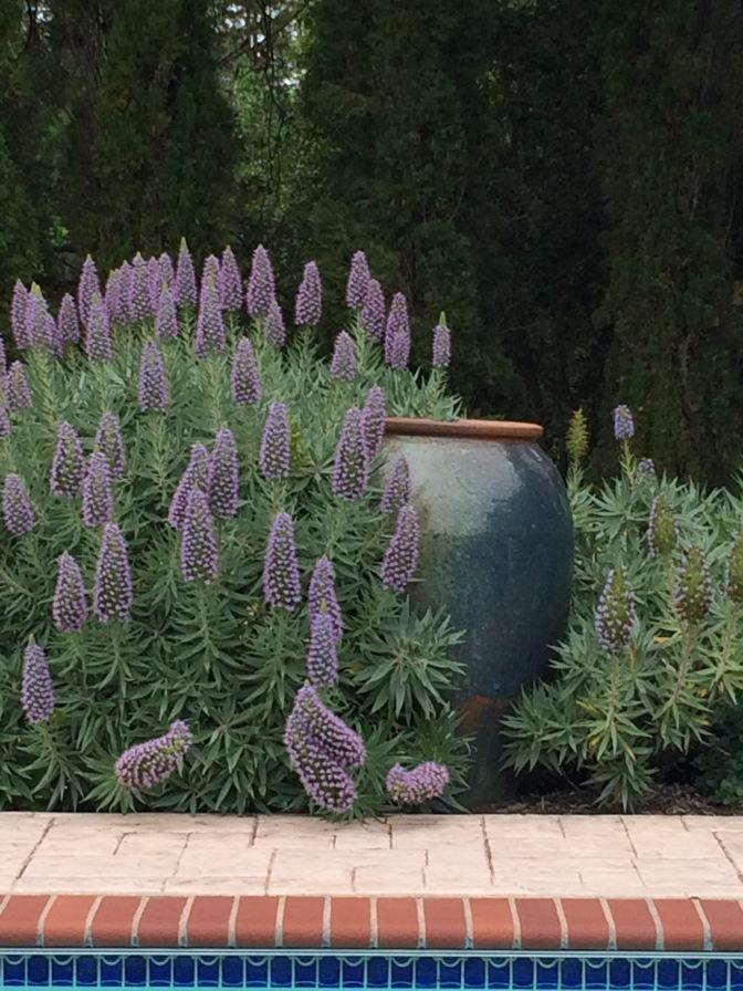 Van's Gorgeous Garden Abode