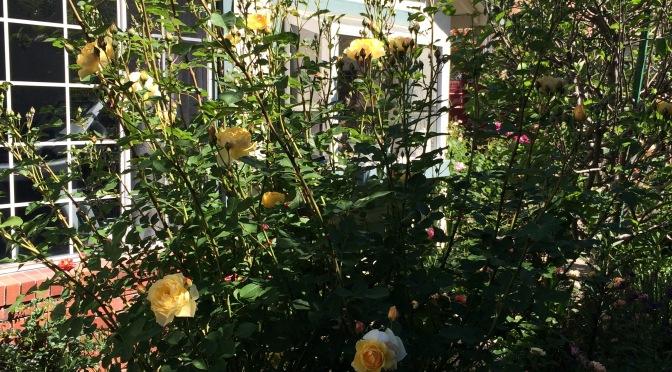 Georgina's Cottage Garden Delight