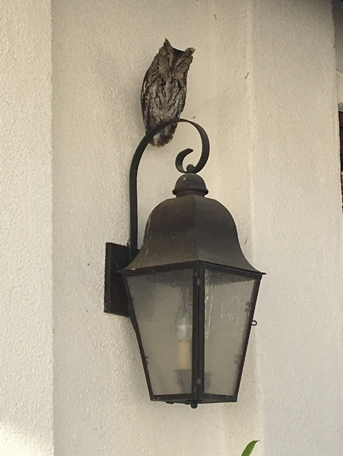 The Owl in the Courtyard