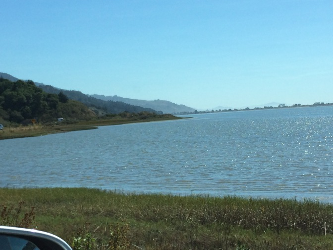 A Scenic Drive to Bolinas Lagoon & Point Reyes Station, California