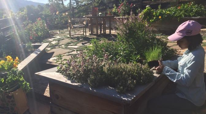 The Joy of Herb Gardening