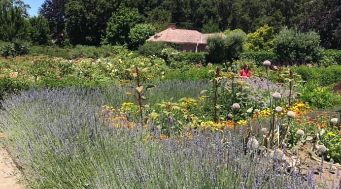"""""""FIght for a just cause; LOve your fellow man; LIve a good life."""" FILOLI Gardens in the Summer"""