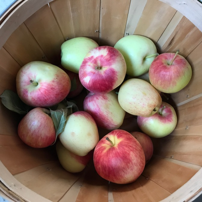 Swimming in Summertime Apples from the Garden