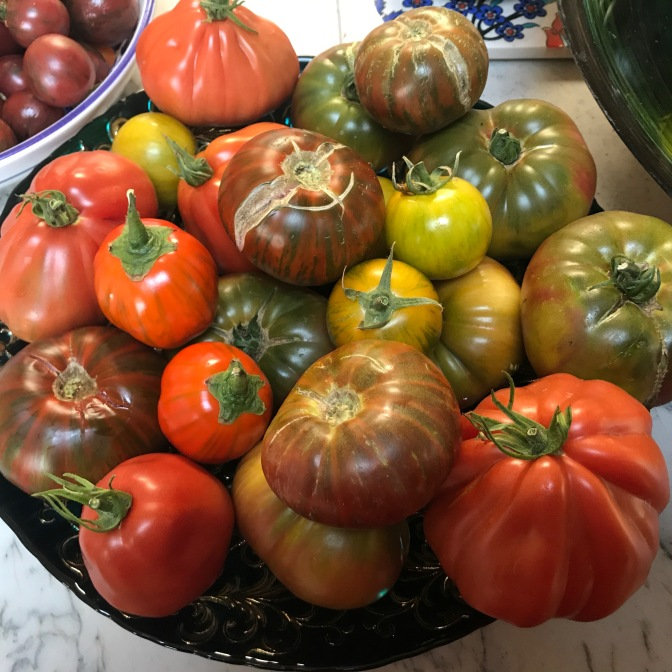 Late Summer Bounty of Tomatoes, Eggplants, Peppers & Squash