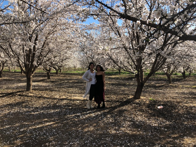 A Drive Through Blossom Trail in Fresno County, California