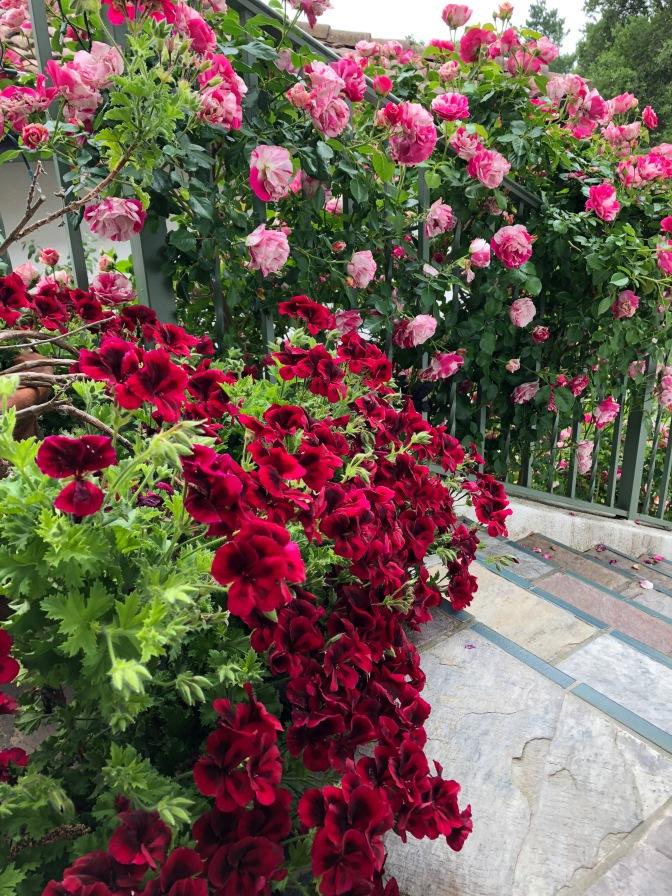 April Garden Pics