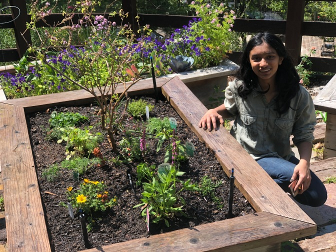 Anjali's New Herb Patch