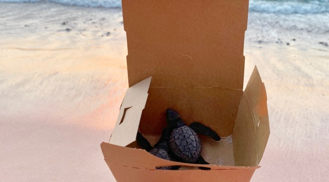 Releasing Baby Turtles into the Ocean in Punta Mita, Mexico