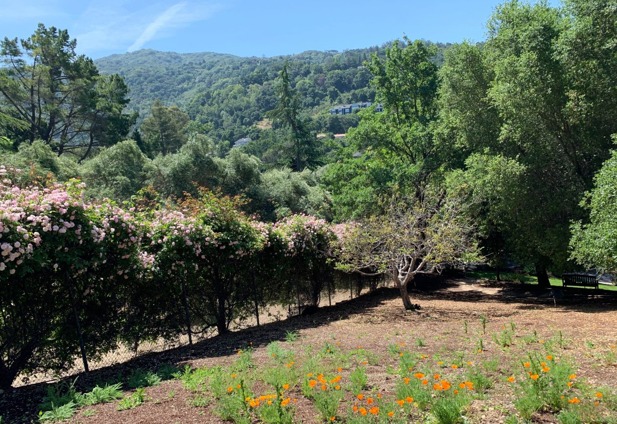 Surreyfarms. A serene haven in the foothills of Northern California