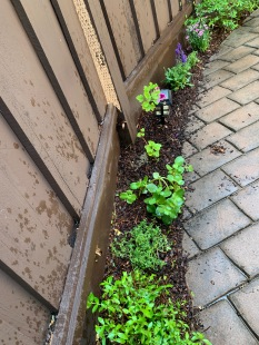 Oregano, thyme, sage and purple dianthus