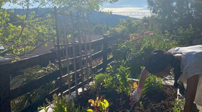 Veggie Planting on our Hill. May 2020