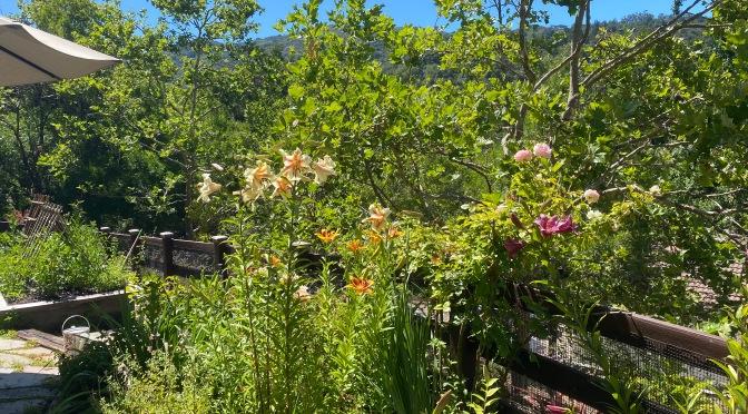 Friday Flowers & Veggie Garden Update